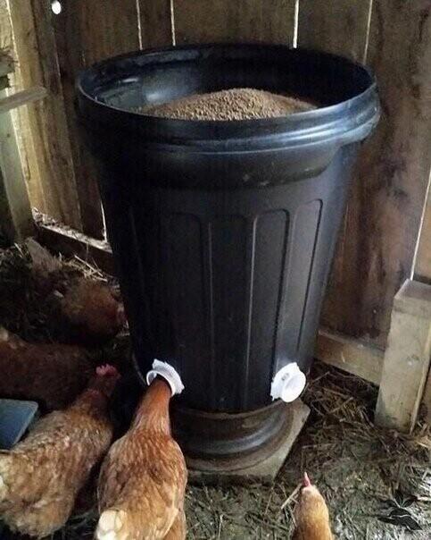 Идеи для курятника