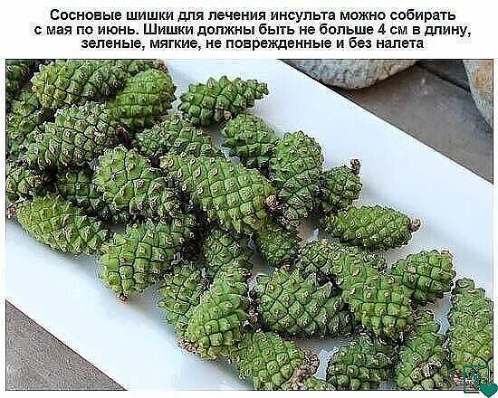 Сосновые зелёные шишки для профилактики инсульта
