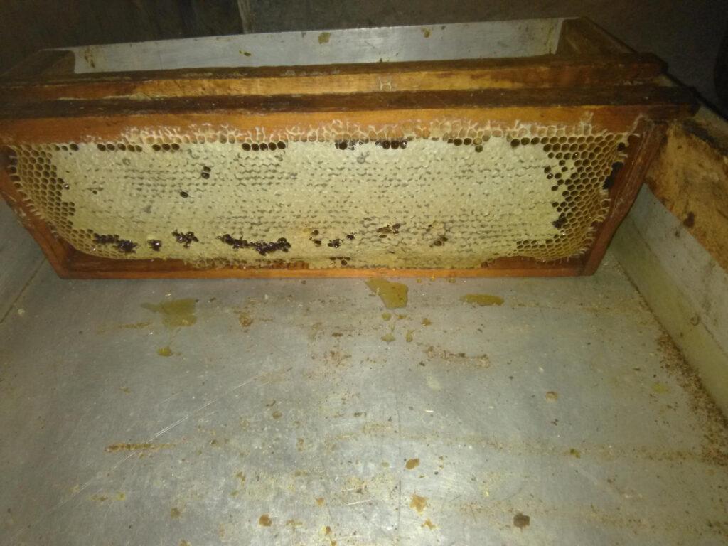 Любите пчел и мёд !