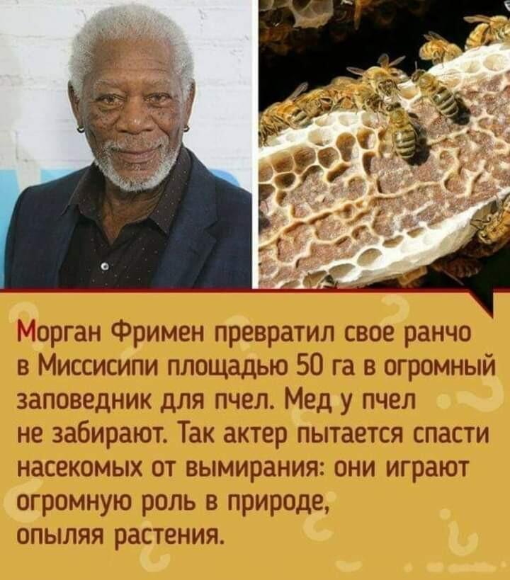 Морган Фримен создал заповедник для пчёл