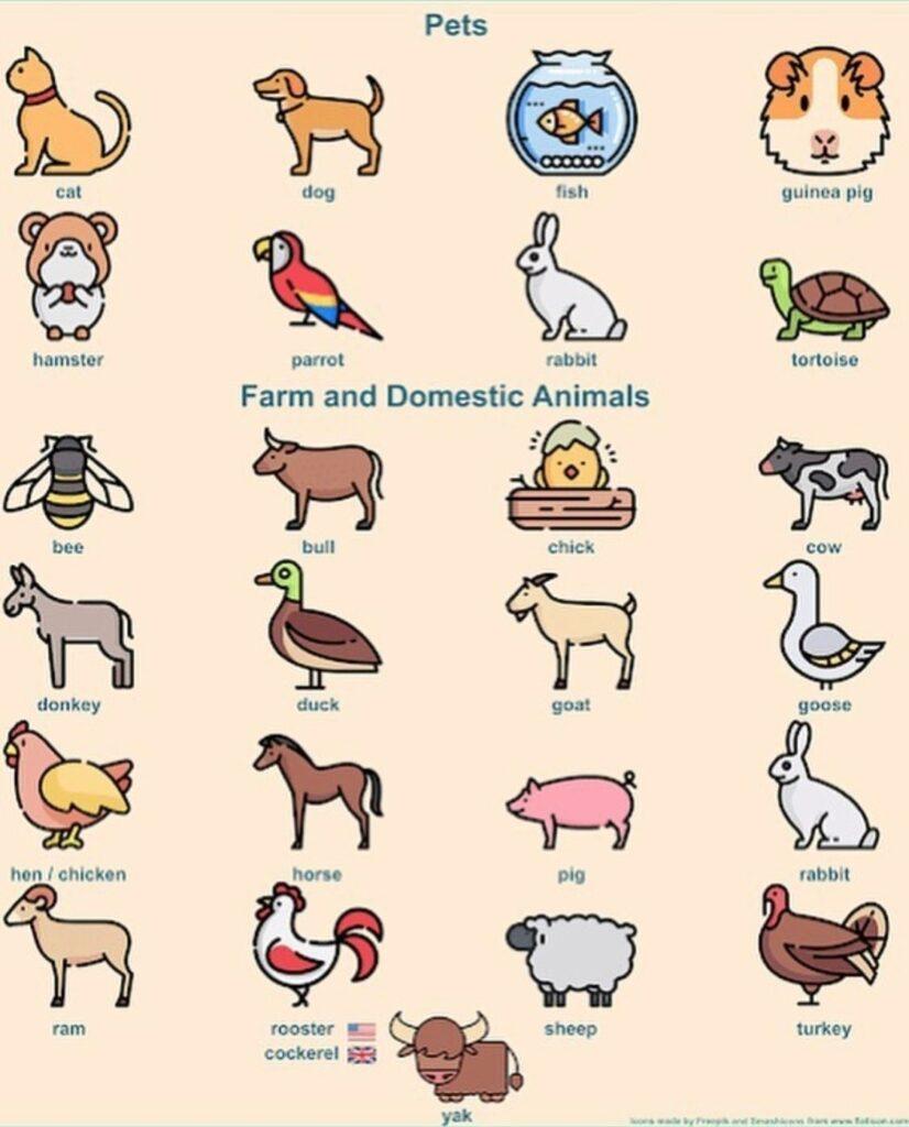 Карточка с названиями животных на английском языке и рисунками для самых маленьких