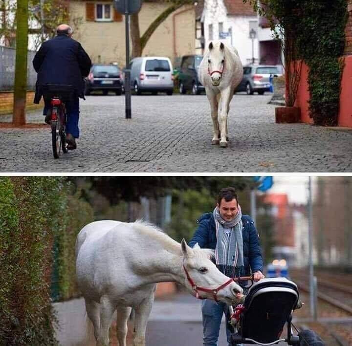 Серая лошадь по имени Дженни