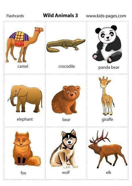 Карточки, которые помогут выучить названия всех животных