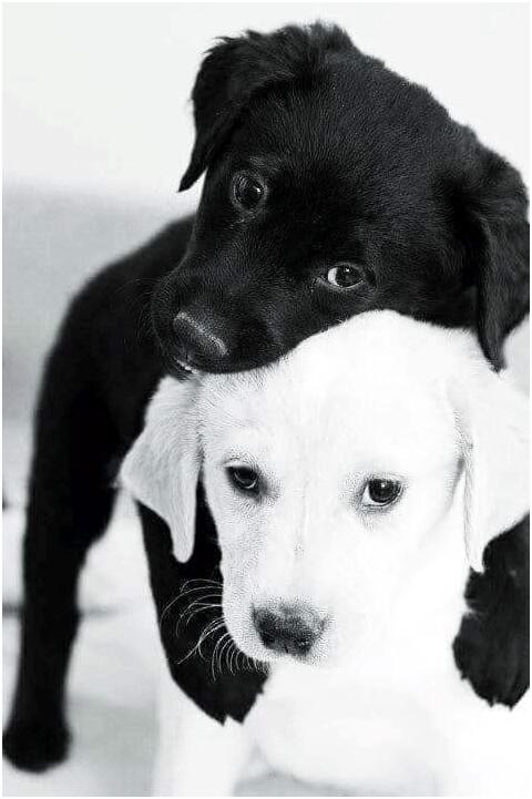 ...Если нечего дать собаке — не надо ее подманивать. Эссе Анны Кирьяновой