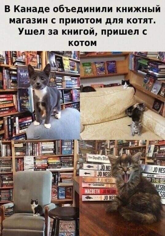 В Канаде объединили книжный магазин с приютом для котят, а дома престарелых с детскими приютами