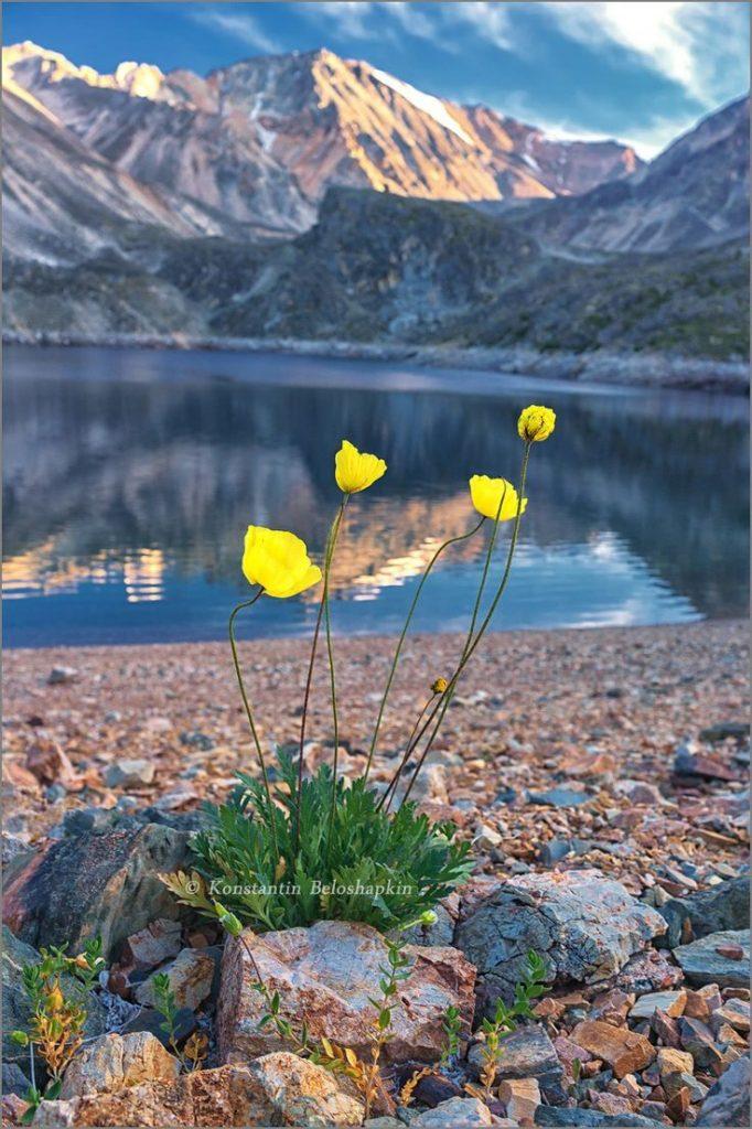 Алтай - край водопадов, бурных рек, гор-великанов, прозрачных голубых озер...