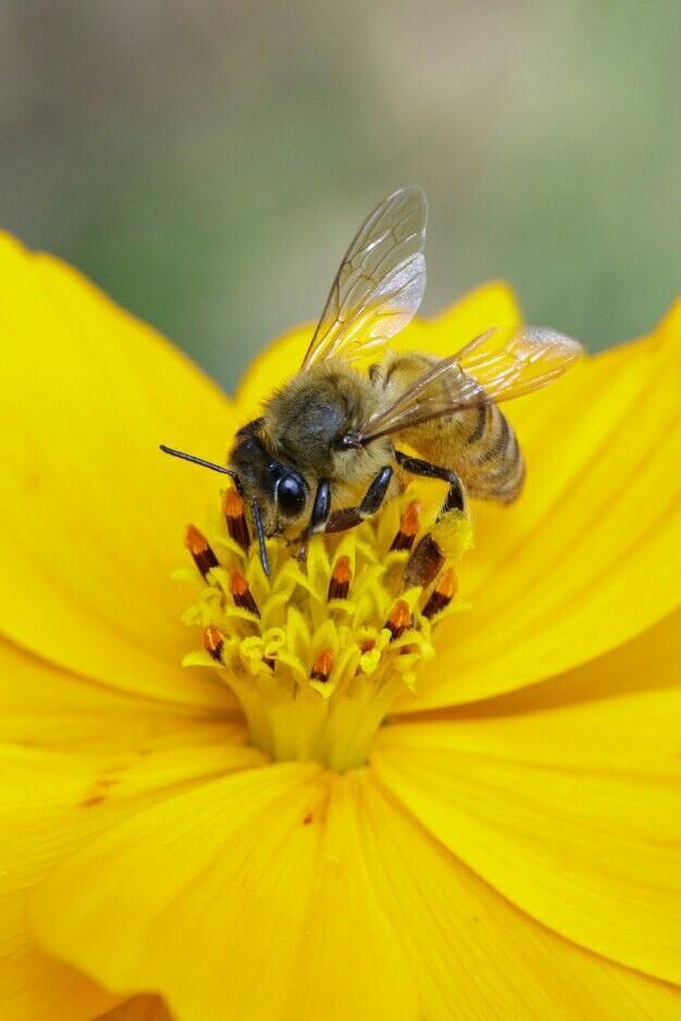 Интересные факты о пчёлах