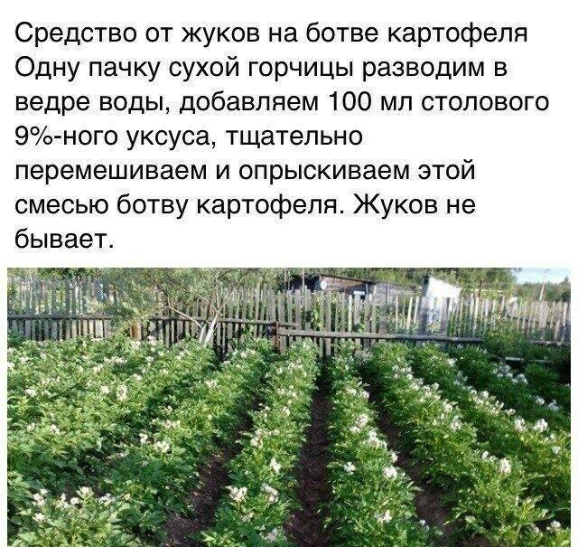 Выращивание картофеля. Советы из сети