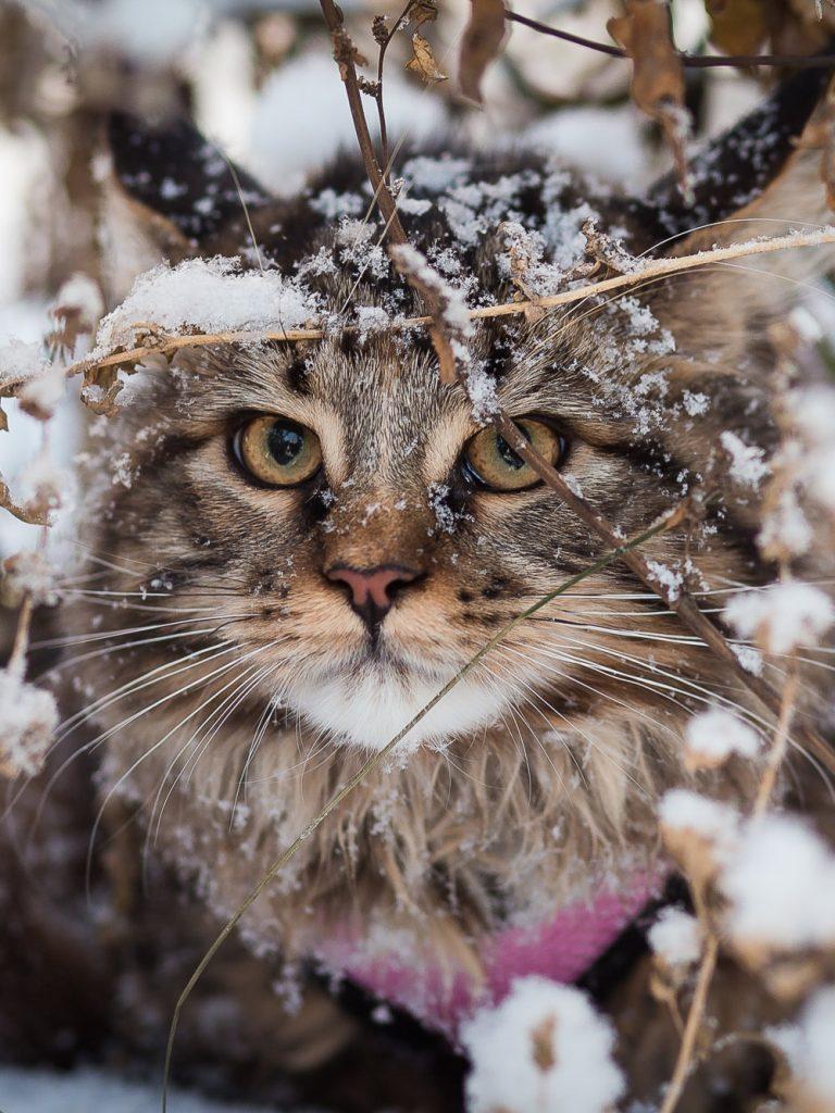 Кот сидел возле подъезда. Рассказ Олега Бондаренко