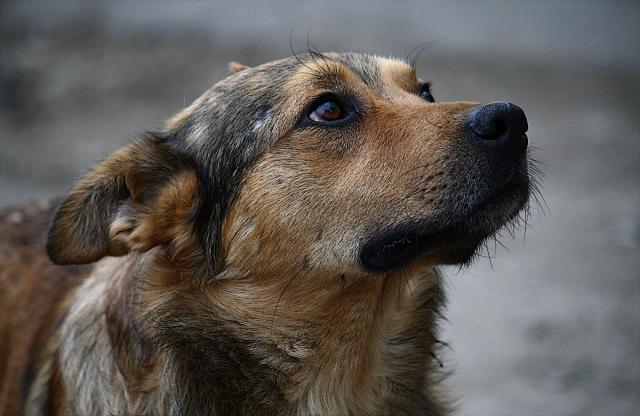 Пёс. Нина Анчараева