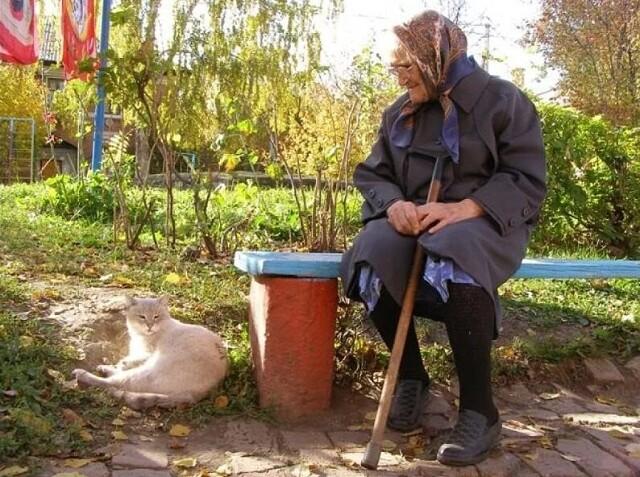 Про старушку, кота и водителя. Рассказ из сети