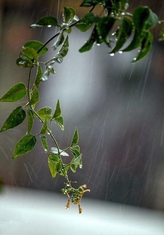 Лексика о погоде