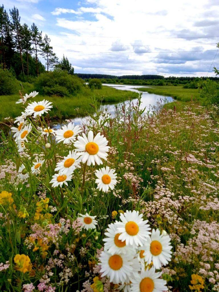 В каждой траве и в каждом цветке большая прелесть заключается. Константин Паустовский