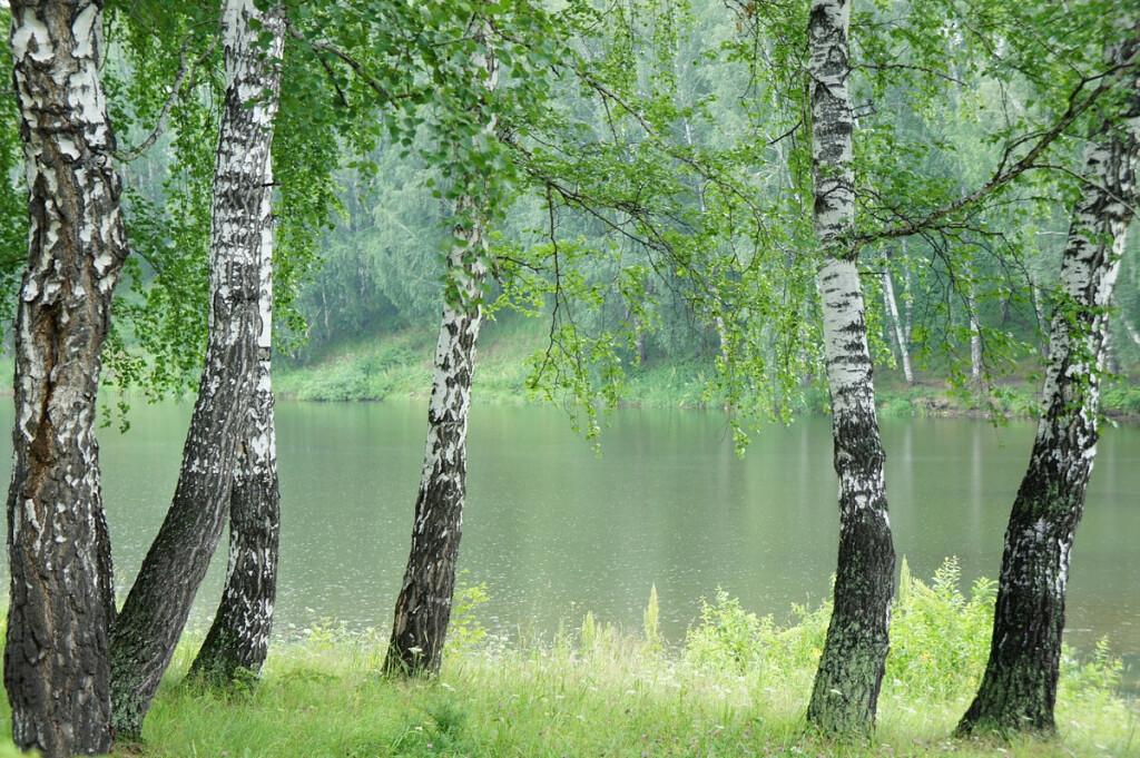 Как удивительно и странно природа лечит наши раны...