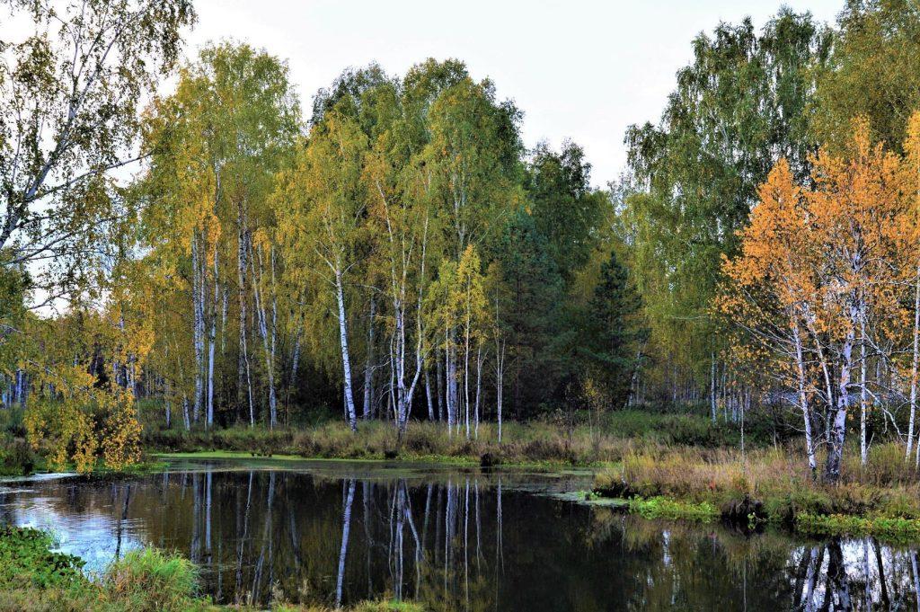 Андрей Дементьев. Нет без леса России