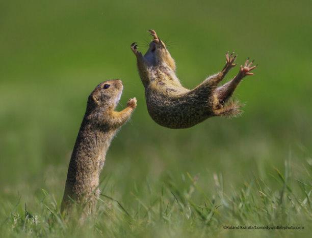 Финалисты конкурса на самую смешную фотографию с дикими животными