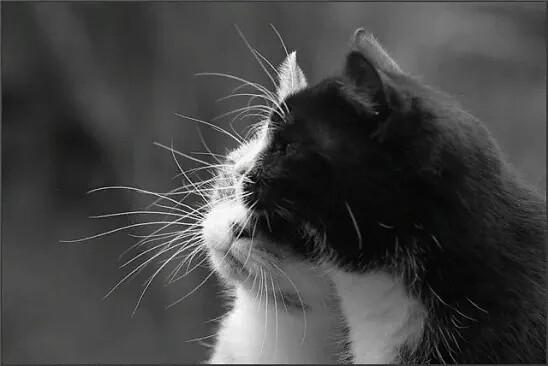 Кошки. Автор: Олег Бондаренко