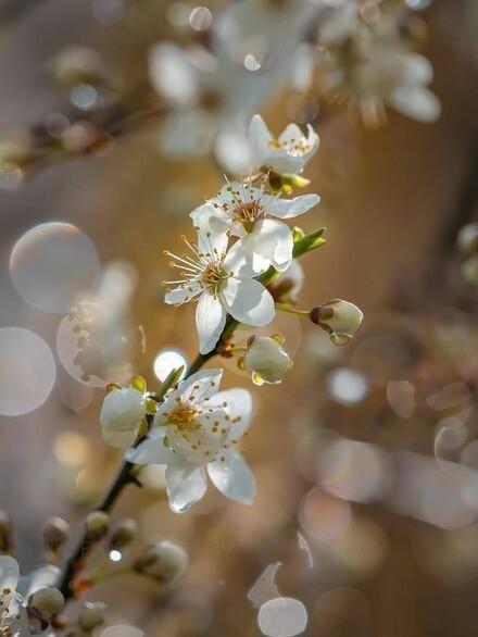 Лариса Миллер. Поют скворцы, цветут пролески