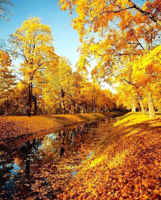 В осеннем солнечном лесу человек становится чище» — да, почаще бы всем нам в этот желтый лес