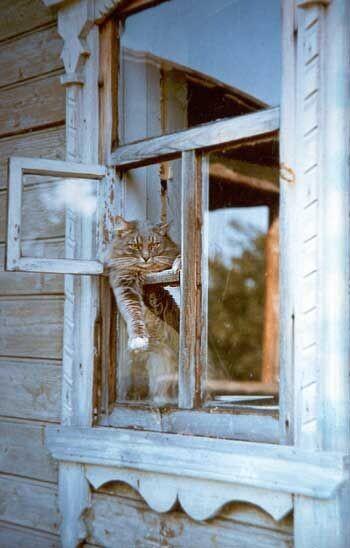 Кот по имени Лысый. Автор: #ЛилияПрохорова