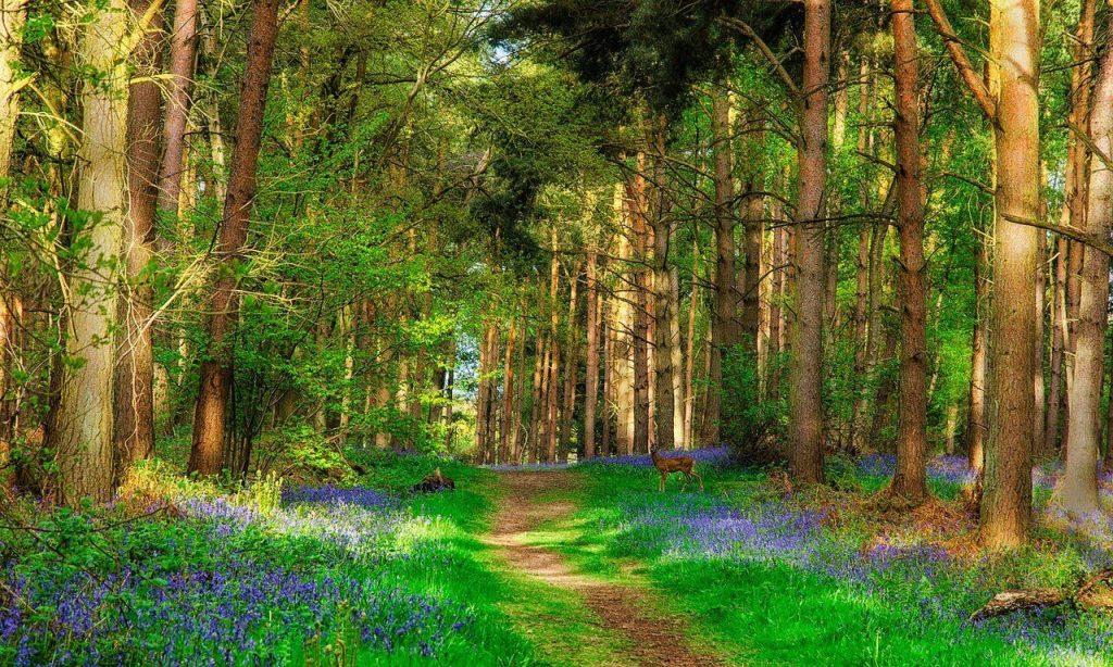 Находка в лесу. Рассказ Кружева слов