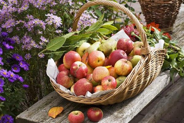 Яблочный отвар