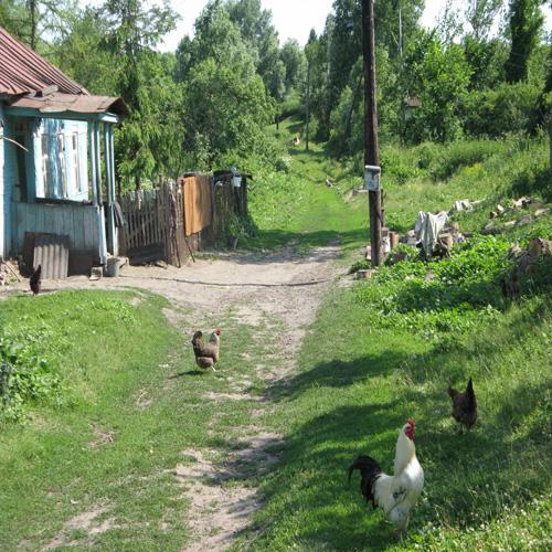 Сватовство под забором. Автор: Татьяна Филькова