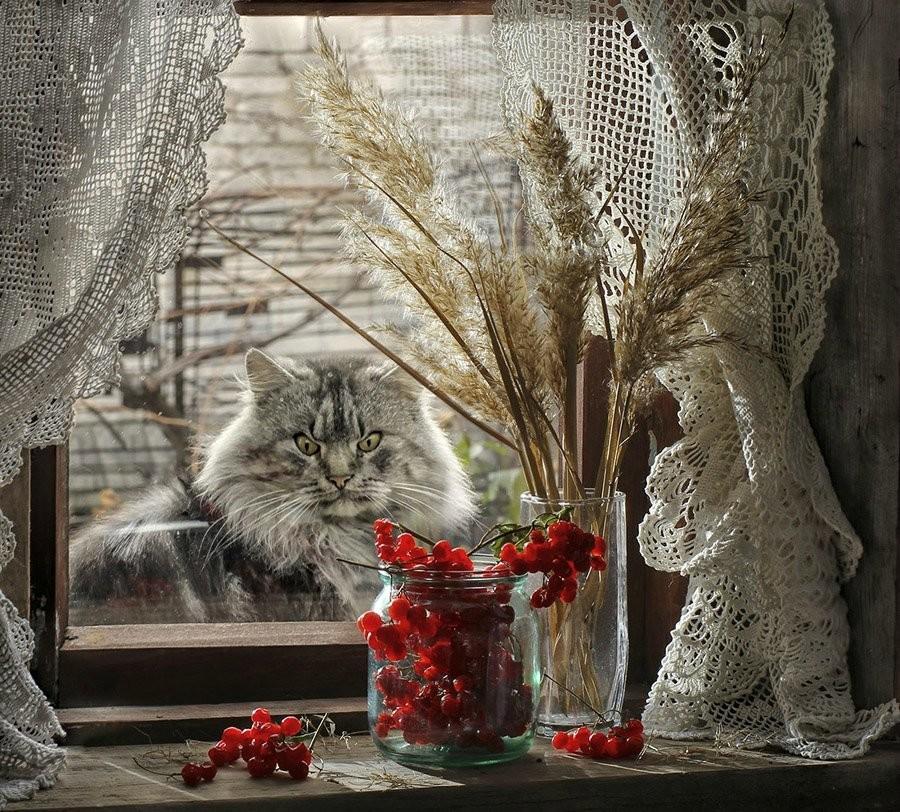 Добрая история про кота. Эссе Анны Кирьяновой