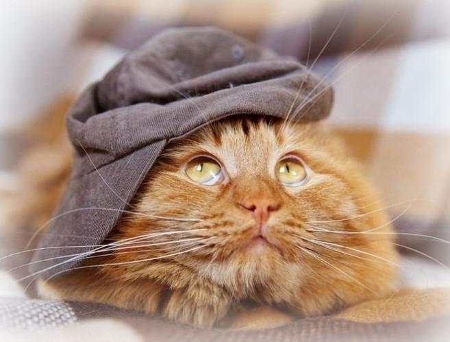 Кот нашел телефон. Автор: Cebepinka