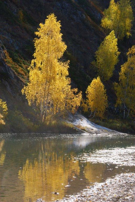 Золотая осень на Алтае...