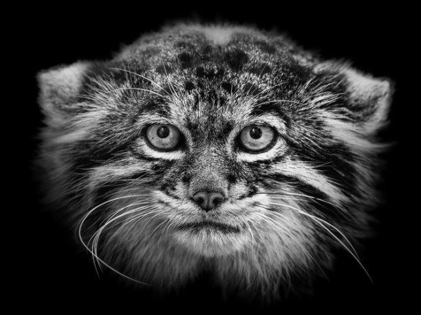 Престижный фотоконкурс Hasselblad объявил финалистов. Среди них – российский фотограф Михаил Киракосян