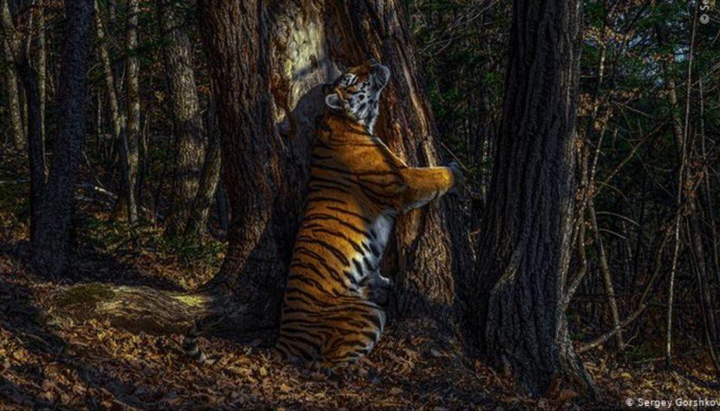 Победителем 56-го конкурса Wildlife Photographer of the Year стал российский фотограф Сергей Горшков