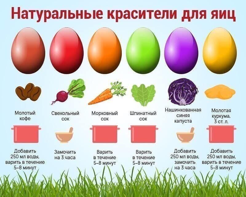 Всё про яйца