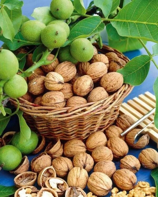 О пользе орехов, зёрен и семян